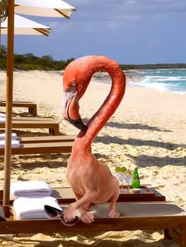 Combined Animal - Nude Beach