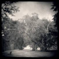 A Quiet Winds Omen