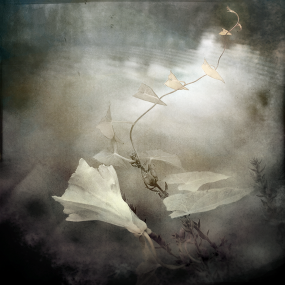 Summer Dream by intao