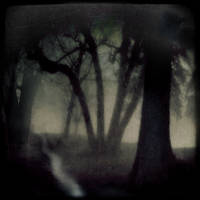 Bad Woods by intao