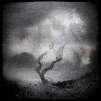 Wind Swept by intao