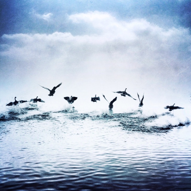 Freedom by intao