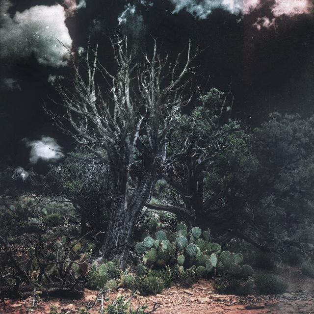 Desert Fire by intao