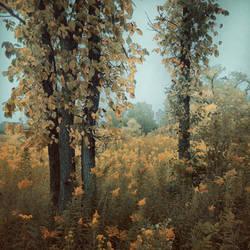 A September Song