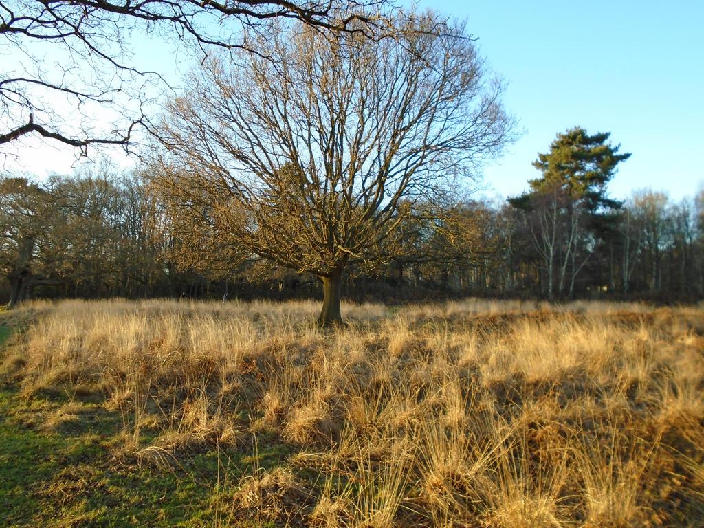 tree grass stock by pegasuswarrior