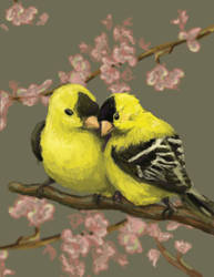 Love Birds by jennifer-jane