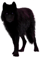 Black Wolf Precut by Illuminicense