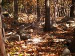Woodsy backyard