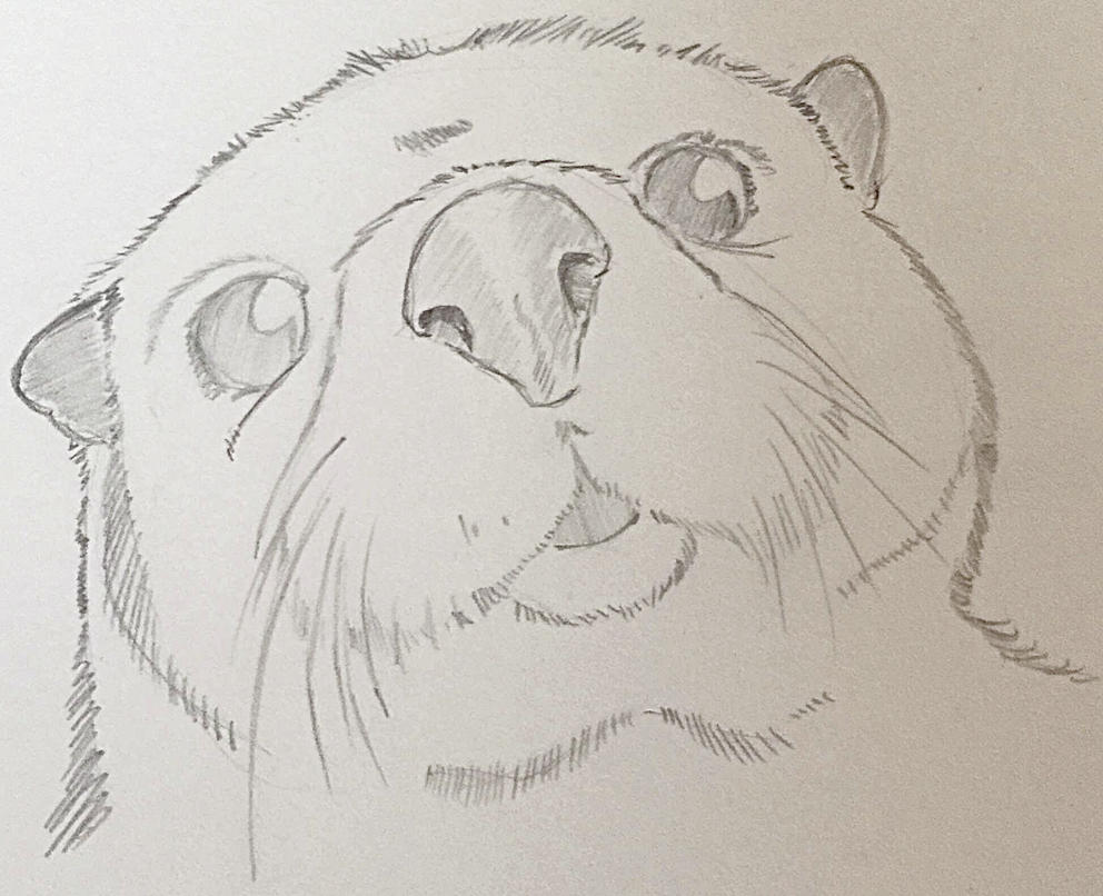 how to draw an otter face