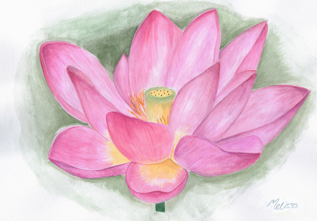 Lotus Flower by xbaby dollx on DeviantArt