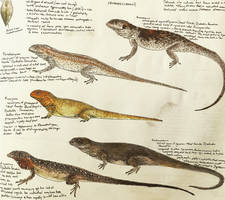 Lizards of Late Cretaceous Mongolia by PrehistoryByLiam