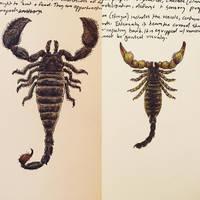 Brontoscorpio and Palaeophonus by PrehistoryByLiam