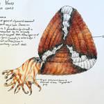 Soliclymenia