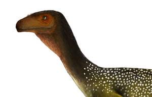 Chilesaurus head detail by PrehistoryByLiam