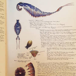 Anomalocaris sketchbook page