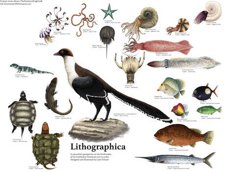 Lithographica
