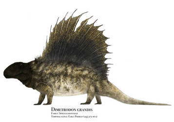 Dimetrodon grandis by PrehistoryByLiam