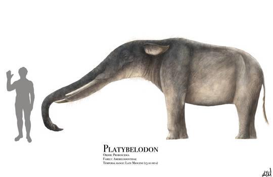 Platybelodon by PrehistoryByLiam