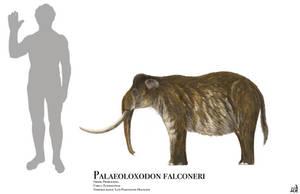 Palaeoloxodon falconeri by PrehistoryByLiam