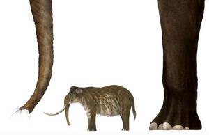 Palaeoloxodon namadicus preview by PrehistoryByLiam