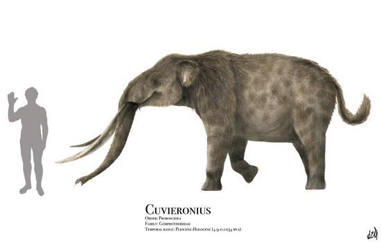 Cuvieronius