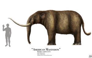 American Mastodon by PrehistoryByLiam