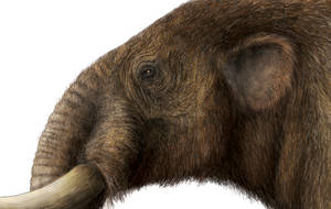 American Mastodon Head Detail