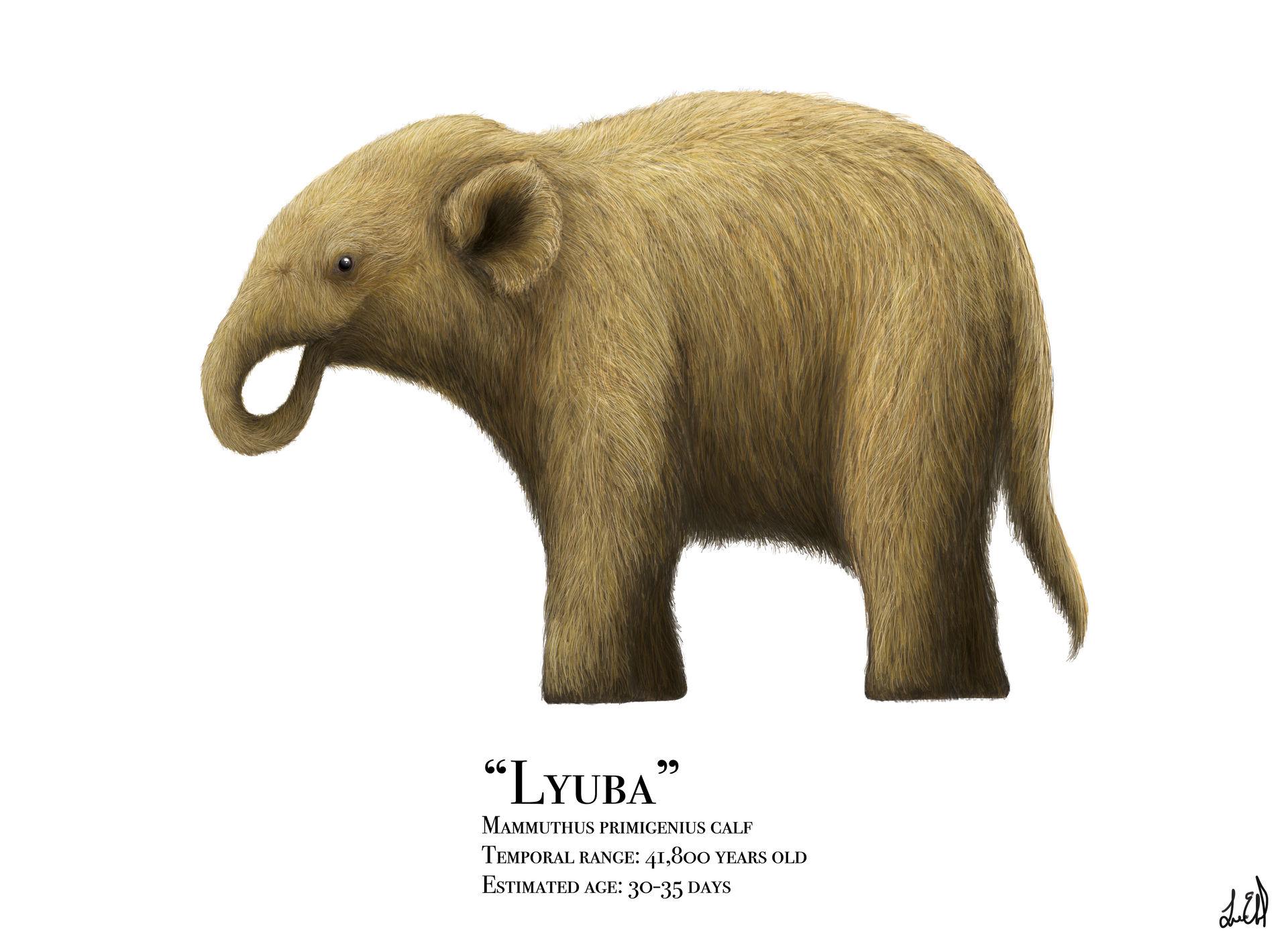Lyuba by PrehistoryByLiam on DeviantArt