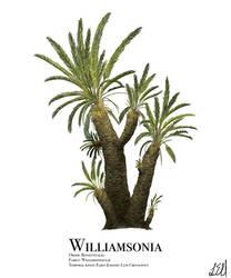 Williamsonia by PrehistoryByLiam