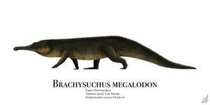 Brachysuchus