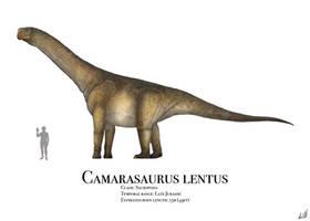 Camarasaurus by PrehistoryByLiam