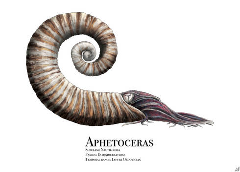 Aphetoceras Anniversary