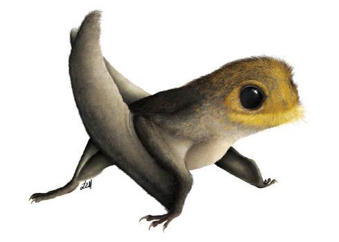 Anurognathus ammoni
