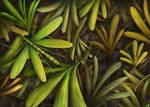 Juracimbrophlebia ginkgofolia camouflage