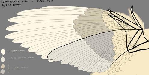 Confuciusornis wing rough diagram