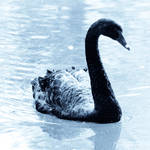Cyan Vision: Swan by 1uno