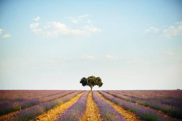 Nature Serenade