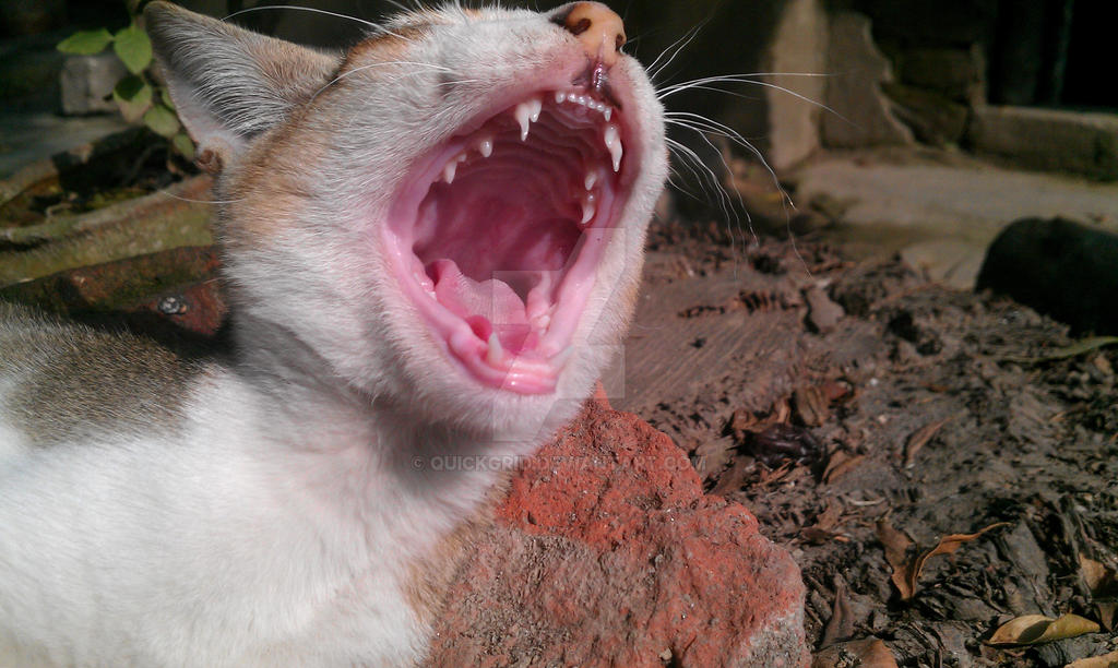 screaming cat by quickgrid