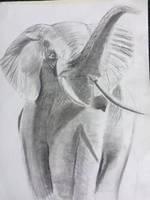 Elephant  by squidofgiants