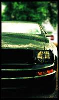 Mister Mustang
