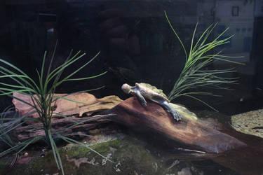 Smiley Turtle