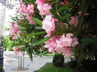 Flores del espolon