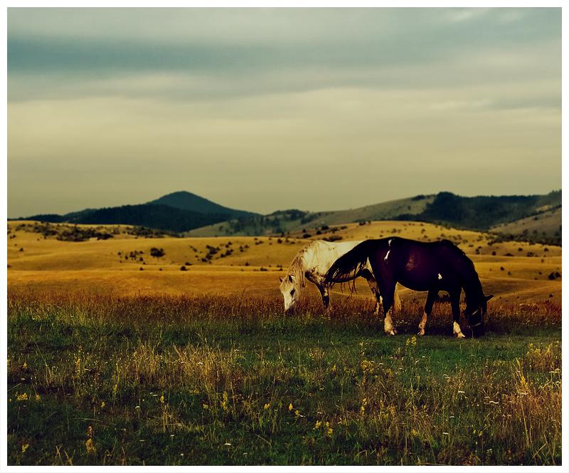 Wild Horses by vulezvrk