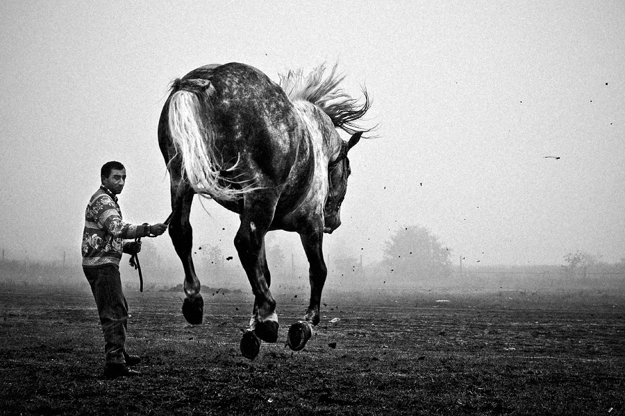 Horse traders III by vulezvrk