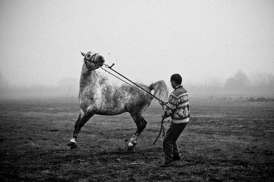 Horse traders V by vulezvrk