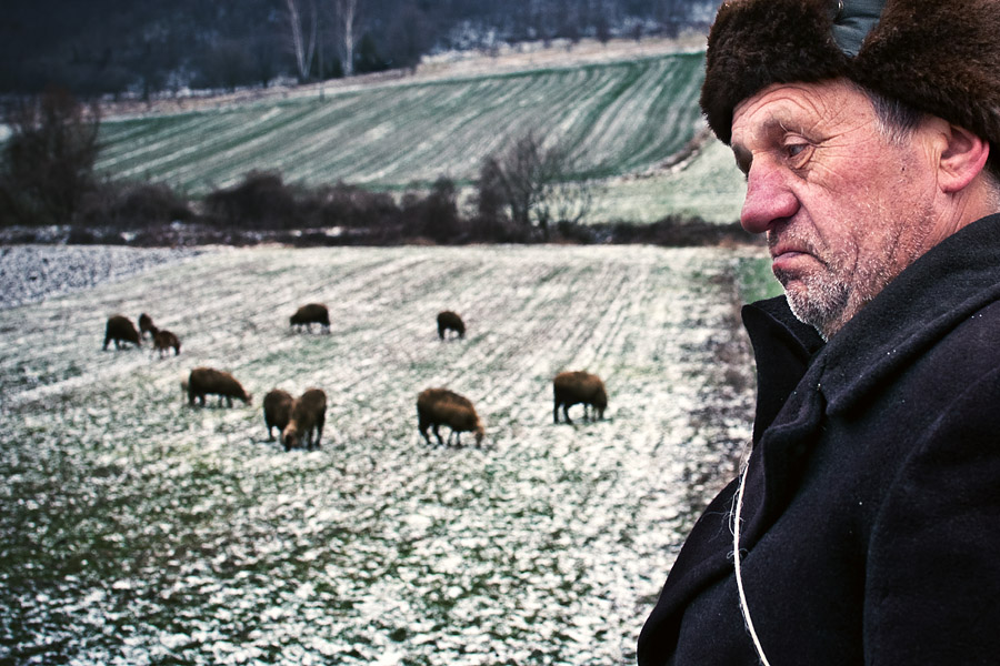 All my sheep by vulezvrk