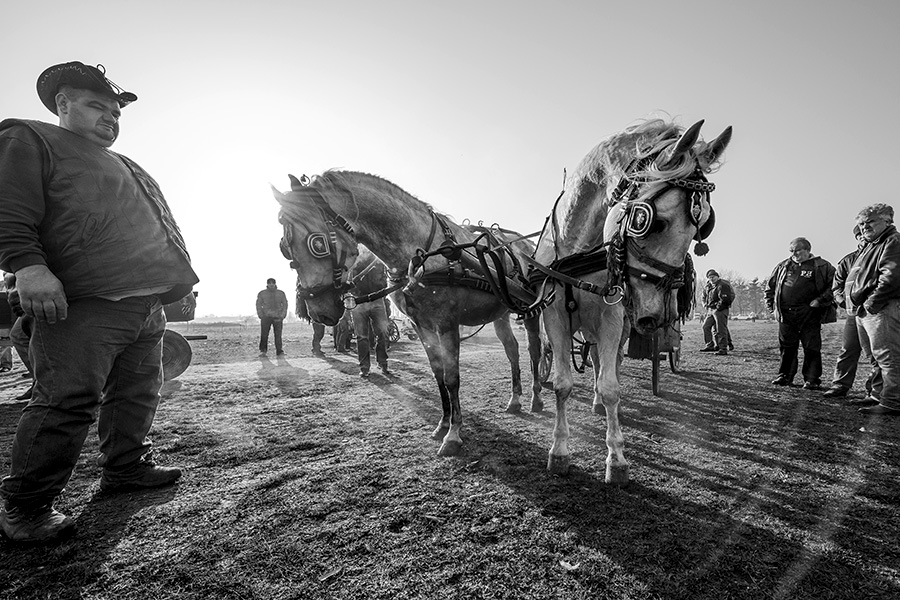 Sunrise with horses traders by vulezvrk