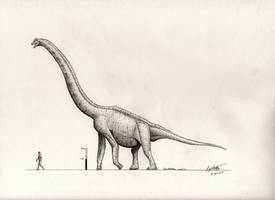 Giraffatitan brancai by palaeozoologist