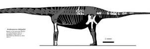 Andesaurus skeletal