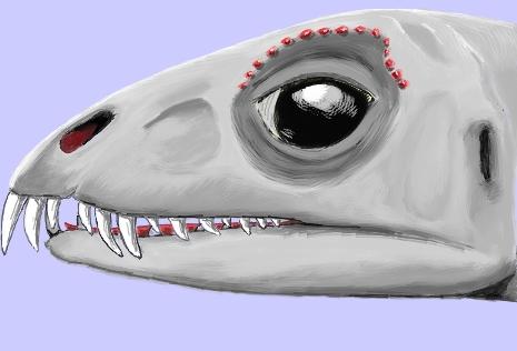 Daemonosaurus by palaeozoologist